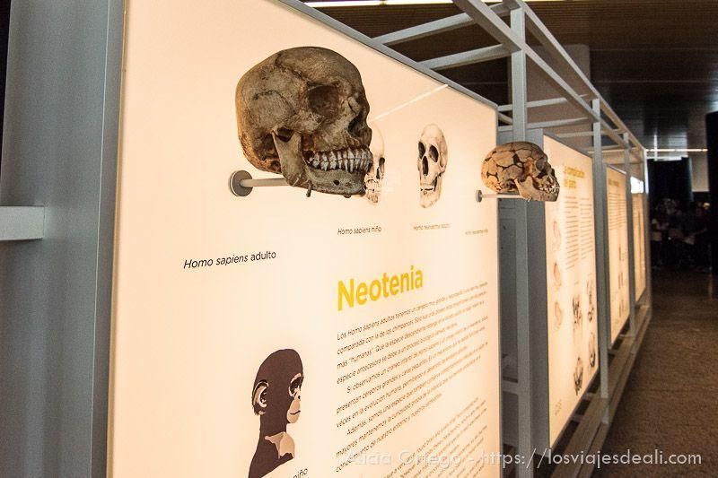fin de semana cidiano museo burgos