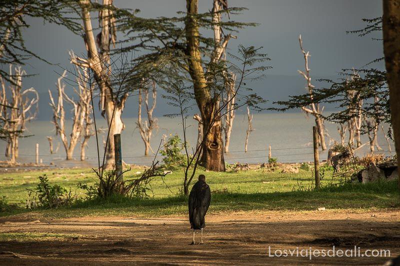 Lago Naivasha al amanecer