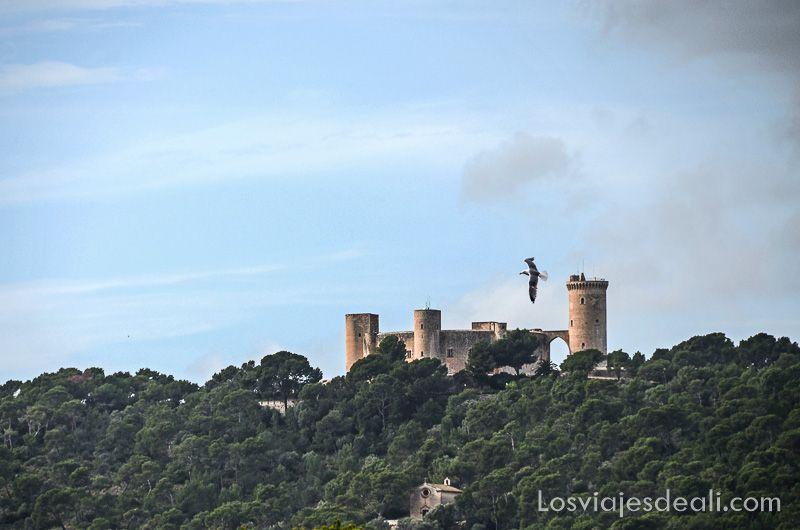 palma de mallorca monumental castillo