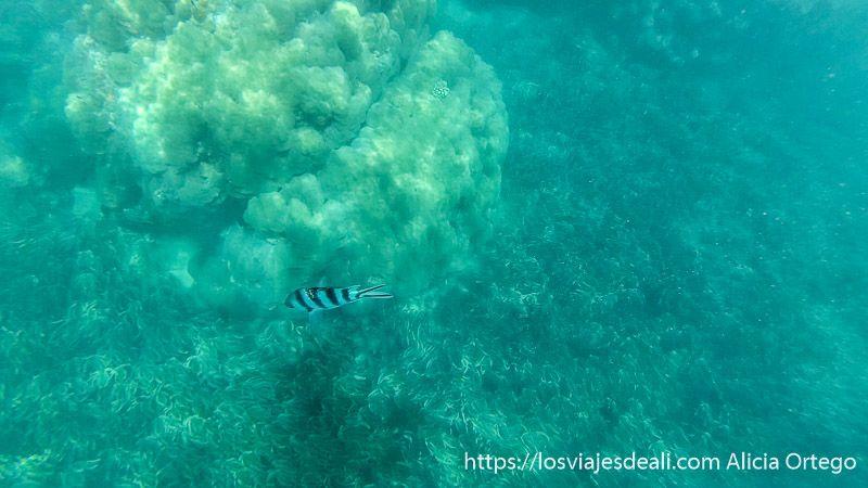 snorkel en las playas de zanzíbar