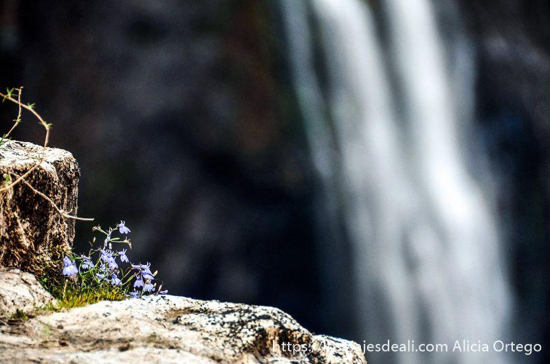 flores en las cataratas victoria