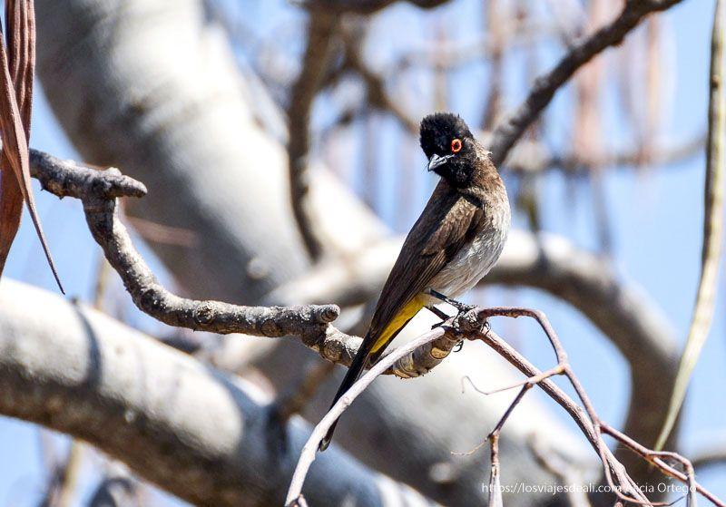 pájaro africano en Etosha