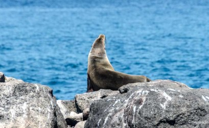león marino sobre las rocas frente al mar excursión a isla seymour