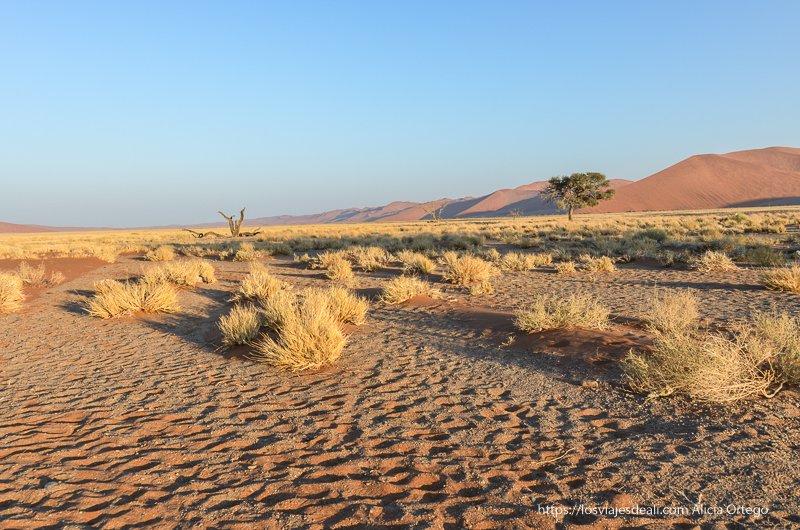paisaje de los alrededores de la duna 45 con matorrales