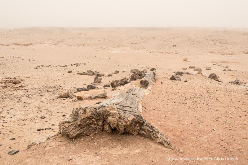 bosque petrificado en Sudán bajo la gran tormenta de arena