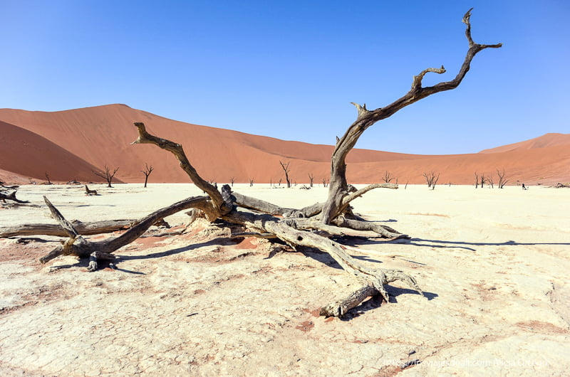 árbol seco con dunas naranjas al fondo y cielo azul en Deadvlei Namibia