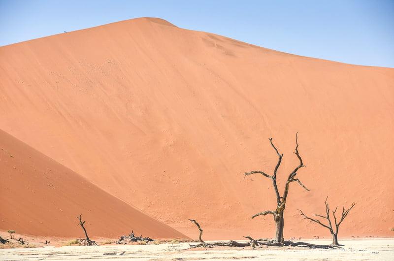 gran duna de arena con tres árboles secos a sus pies en desierto del Namib