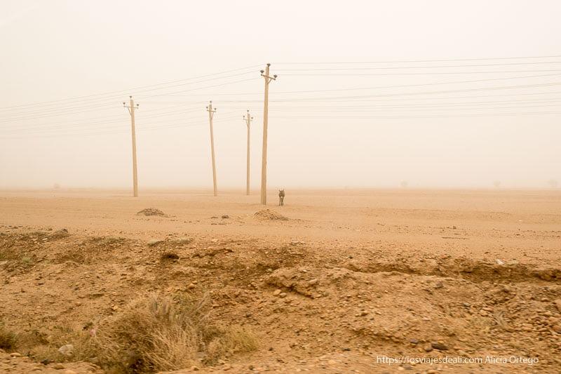 postes de la luz y burrito bajo la gran tormenta de arena colores del mundo