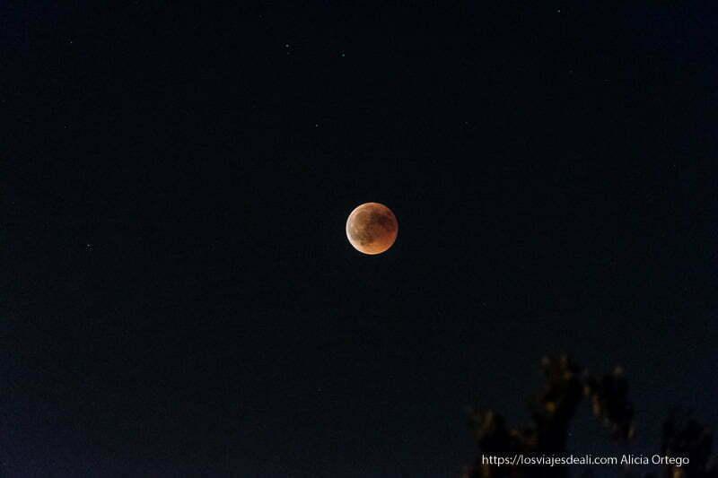 luna roja por encima de los árboles