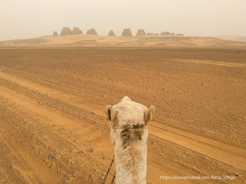 perspectiva de las pirámides de Meroe desde la grupa del camello