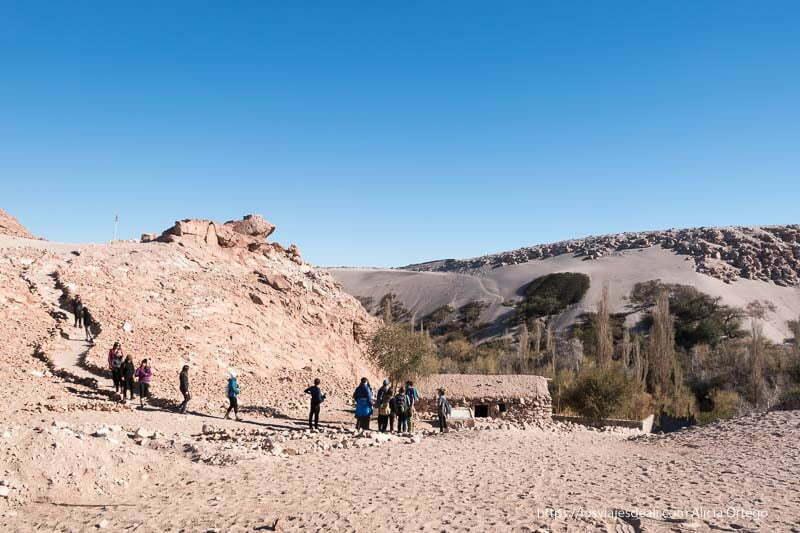 quebrada del jere rodeado de arena y piedras árboles y casa tradicional viajar al desierto de atacama
