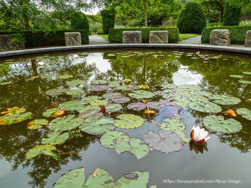 estanque con nenúfares en kilkenny