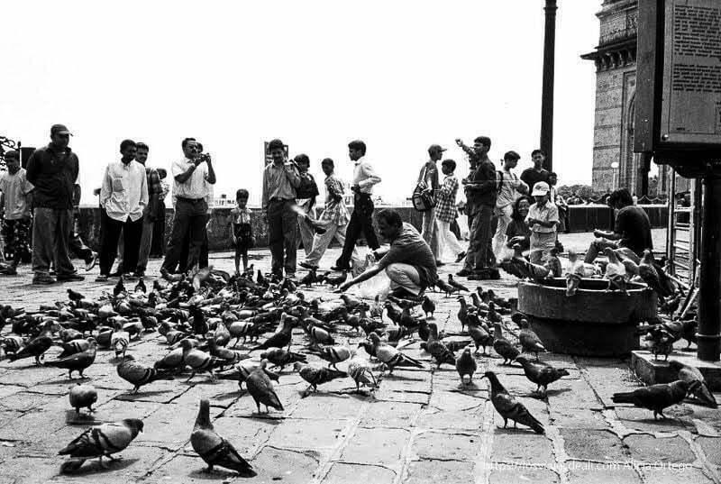 hombre dando de comer a las palomas en bombay