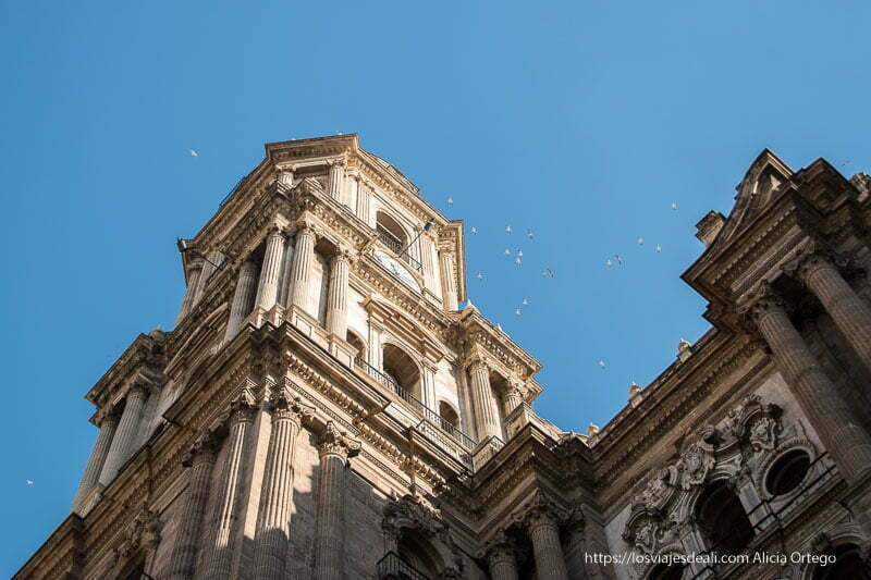 campanario de la catedral con grupo de palomas volando centro de málaga