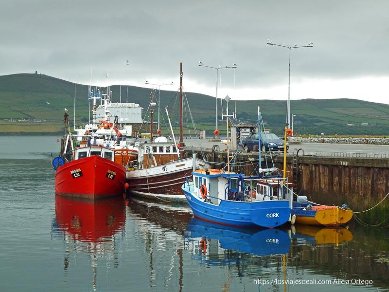 puerto de dingle con barcos de pesca rojo y azul