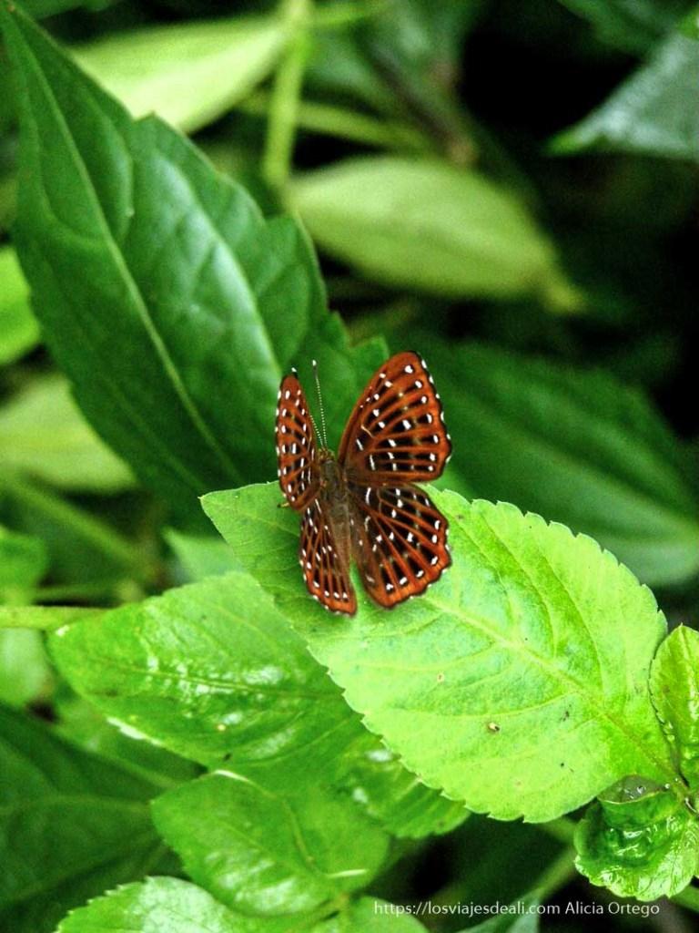 mariposa roja con pintas negras en la bahía de ha long
