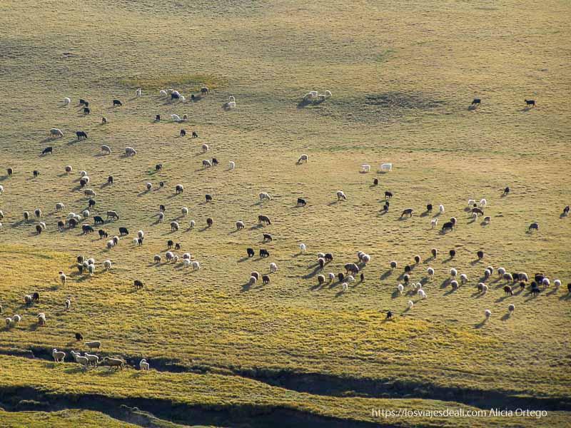 ovejas a lo lejos iluminadas por el sol del atardecer junto al lago song kol
