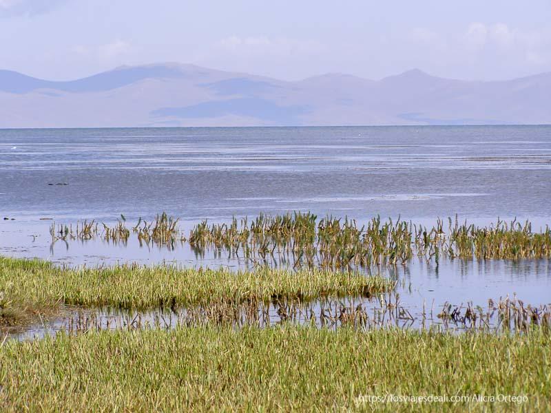 plantas acuáticas en la orilla del lago song kol con montañas al fondo