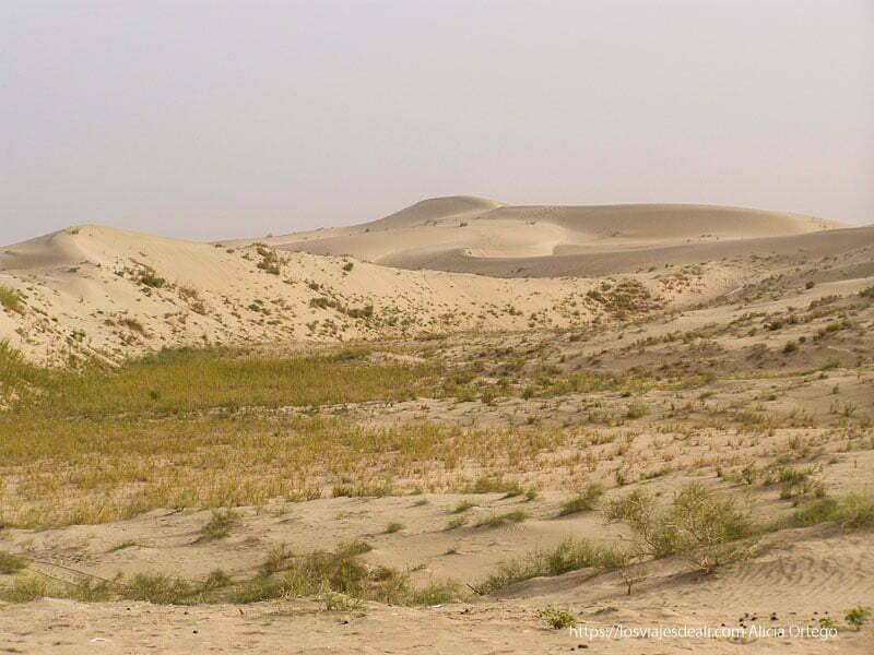 dunas semicubiertas de vegetación oasis de yarkand