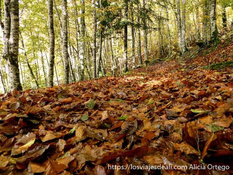 camino lleno de hojas caídas en selva de irati
