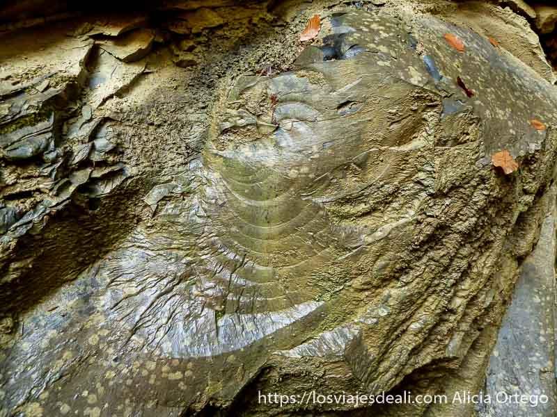 roca cortada que parece tronco de árbol petrificado selva de irati