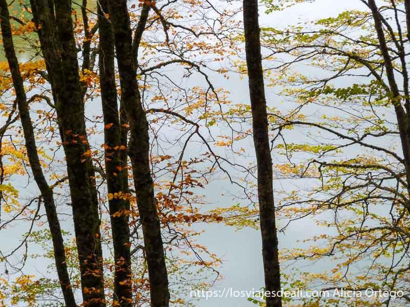 ramas con hojas rojass, amarillas y verdes contrastando con color gris de fondo en selva de irati