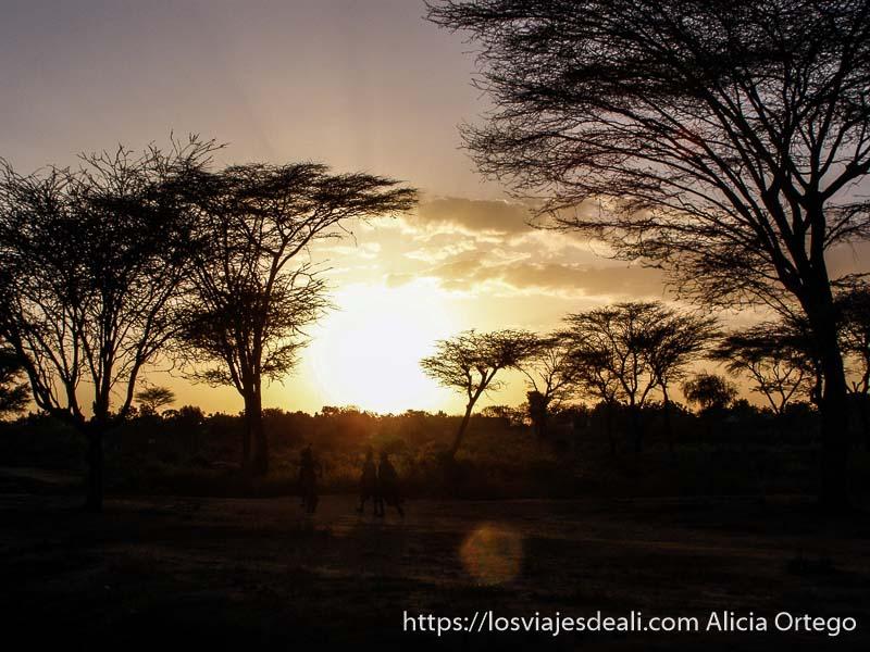puesta de sol entre acacias turmi