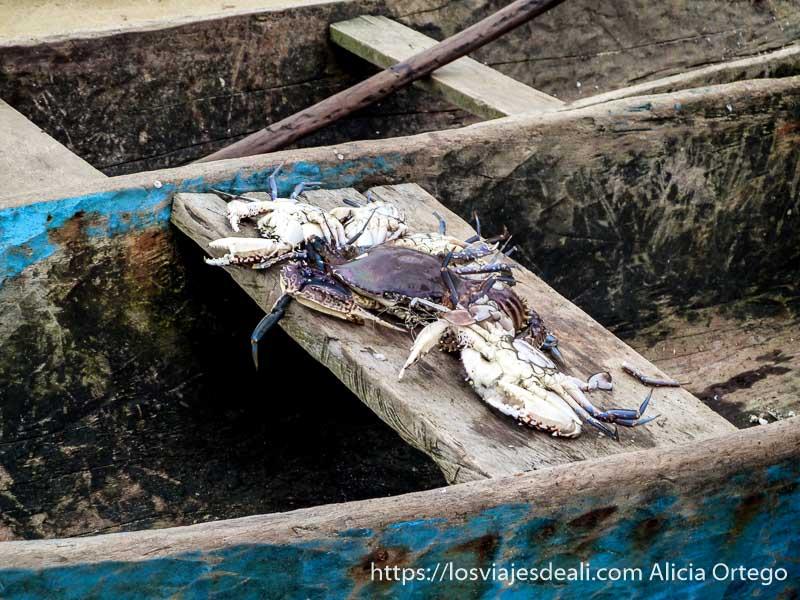 cangrejos recién pescados en una barca camerún