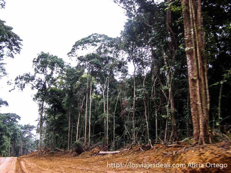 pista que destroza la selva costa del sur de camerún