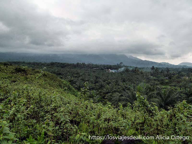 paisaje volcánico con plantaciones de palma en limbe