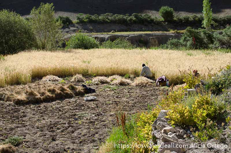 campesinos segando trigo junto al monasterio de lamayuru