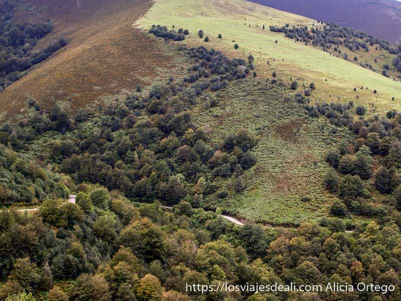 paisaje desde lo alto de la montaña con bosque