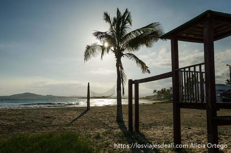 atardecer en la playa con palmera vivir en las islas galápagos