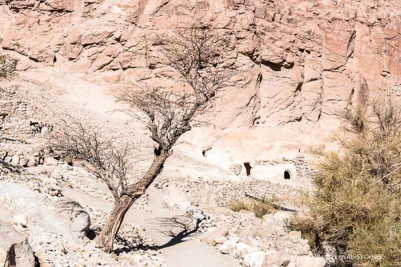 paisaje desértico con árbol seco en quebrada del jere atacama