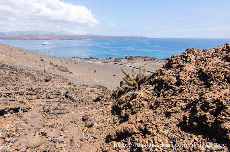 paisaje volcánico con el mar al fondo y un cactus de color verde y amarillo que se abre en racimo entre las rocas