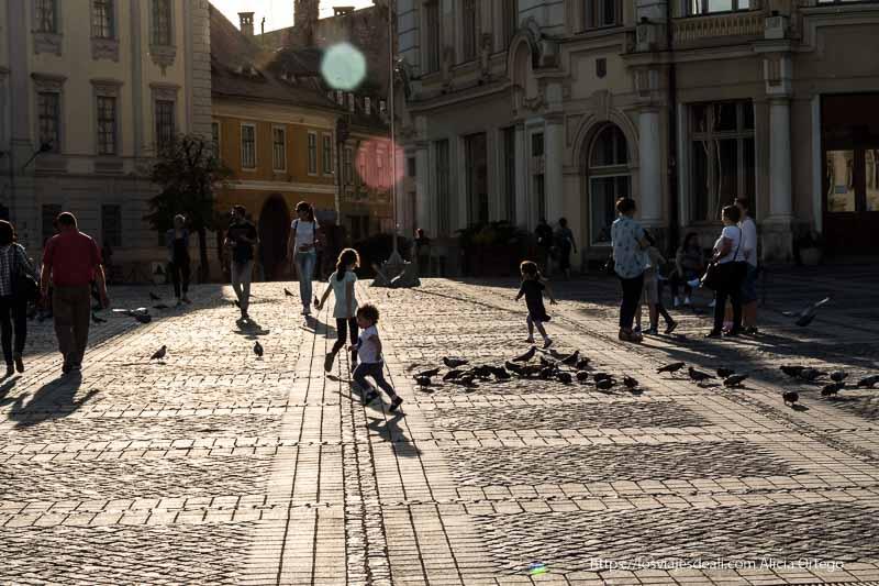 niños corriendo detrás de las palomas al atardecer