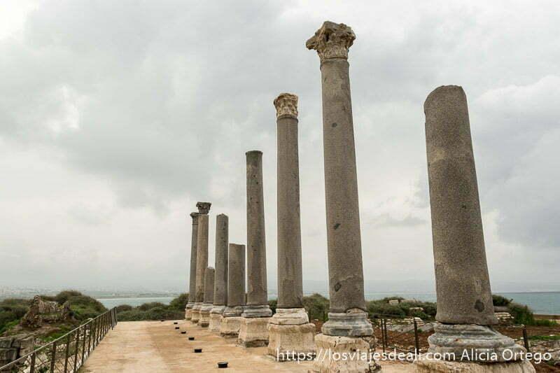 nueve columnas de granito gris puestas en línea y cuatro de ellas aún con capitel corintio en tiro