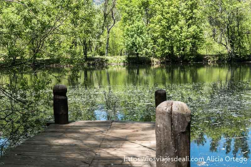 lago con muelle de madera y árboles verdes al fondo reflejándose en el agua