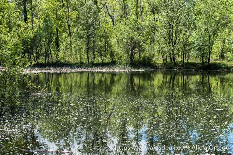 lago donde se reflejan árboles