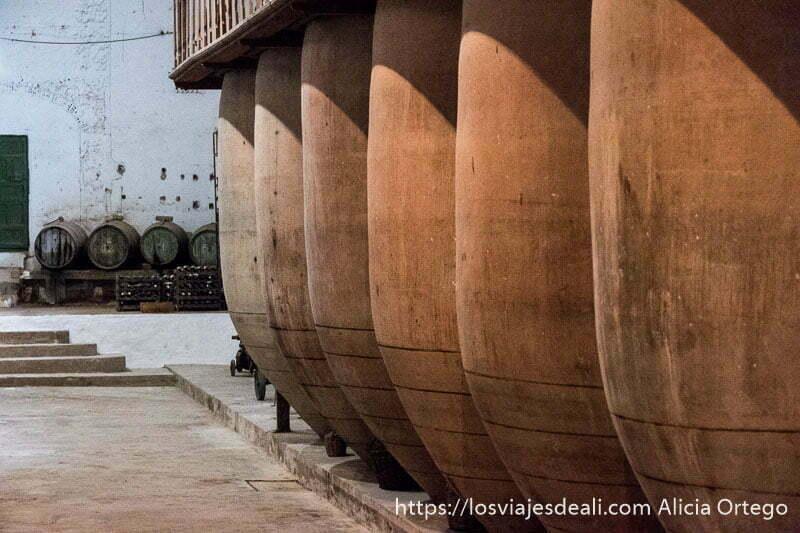 grandes tinajas de barro y toneles de vino al fondo en una bodega de tomelloso en la experiencia en la vendimia