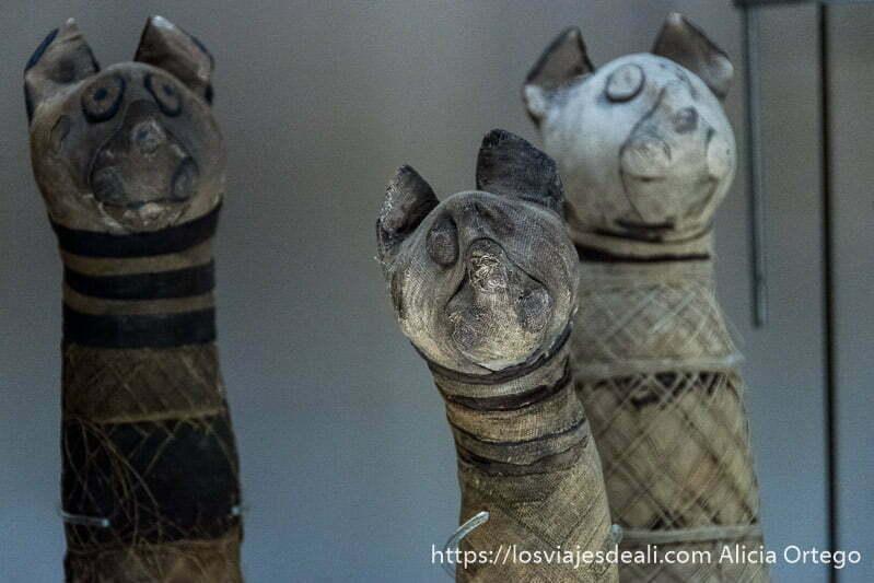 momias de gatos con vendas y cabeza de madera con orejas en el museo arqueológico de bolonia