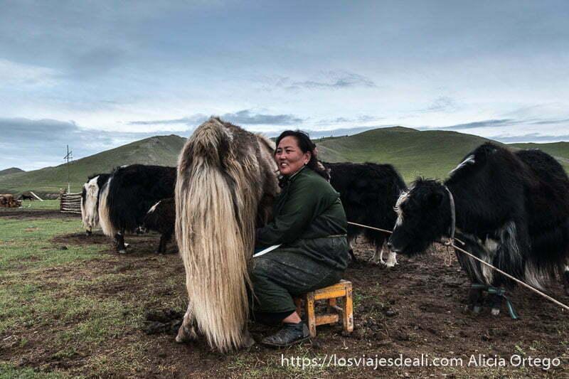 mujer mongol ordeñando un yak sentada en una banqueta sonriente en el valle de orkhon