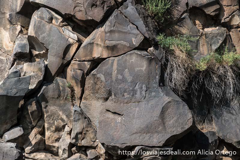 petroglifos o grabados en rocas representando ciervos en el valle de orkhon