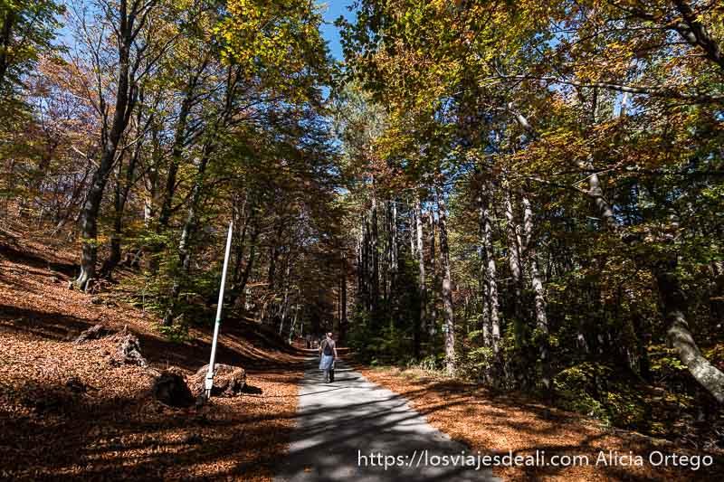 camino entre hayas y suelo lleno de hojas secas y un hombre andando por el centro en el monte karandila