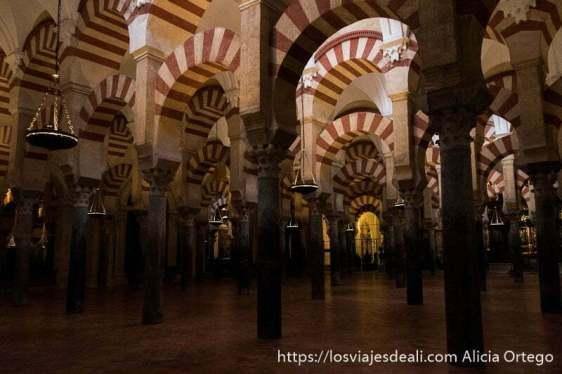 pasillos formados por columnas y arcos de la mezquita de córdoba