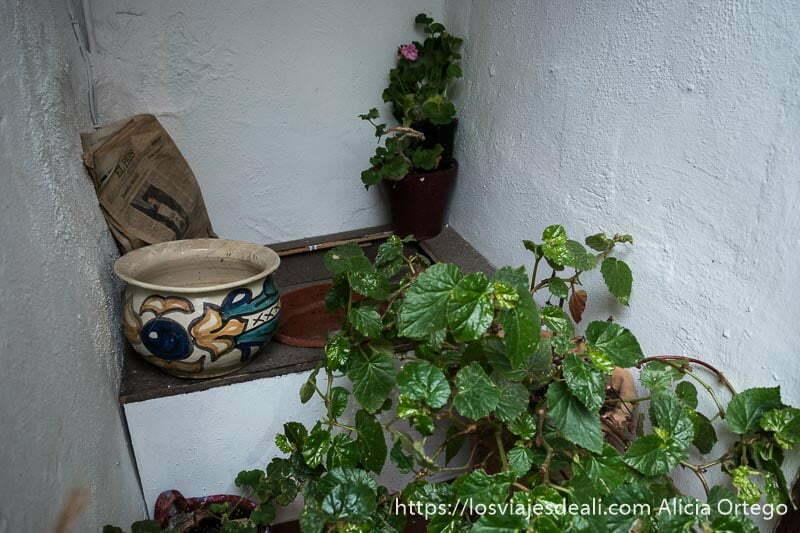 antigua letrina que es una plataforma de madera con un agujero y un orinal de cerámica al lado y varias macetas con flores