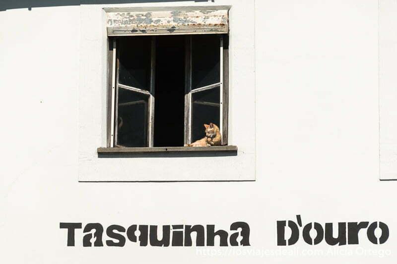 gato lamiéndose una pata en una ventana con pared blanca alrededor y un cartel que pone tasquinha d'ouro