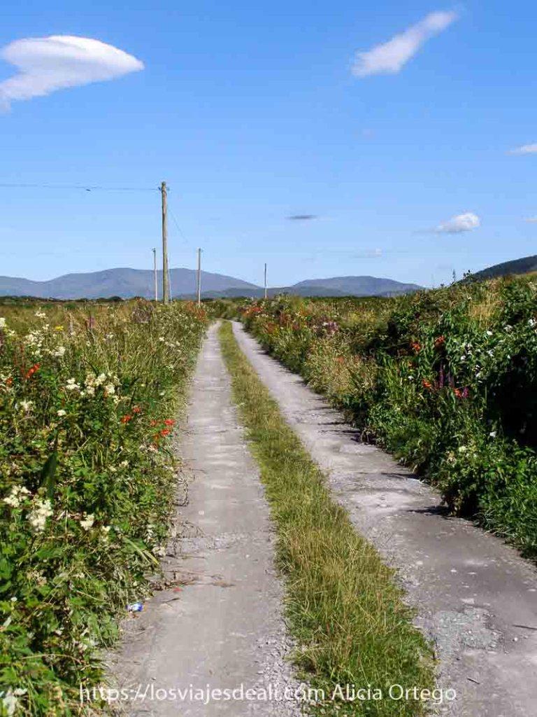 carretera muy estrecha con plantas a los lados llenas de flores y cielo muy azul