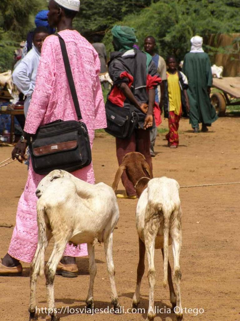 dos cabritas delgadas de espalda y detrás hombres con turbantes en el mercado africano de gorom gorom