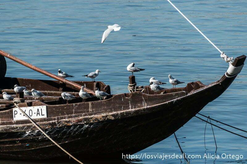 guia de Oporto: gaviotas posadas en la proa de barco de madera en el río Duero